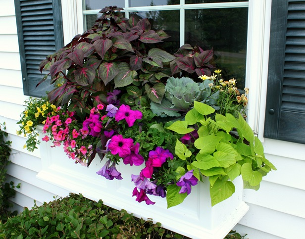 Window Boxes {and a giveaway!}