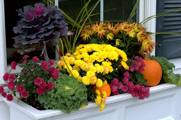 Fall Window Boxes