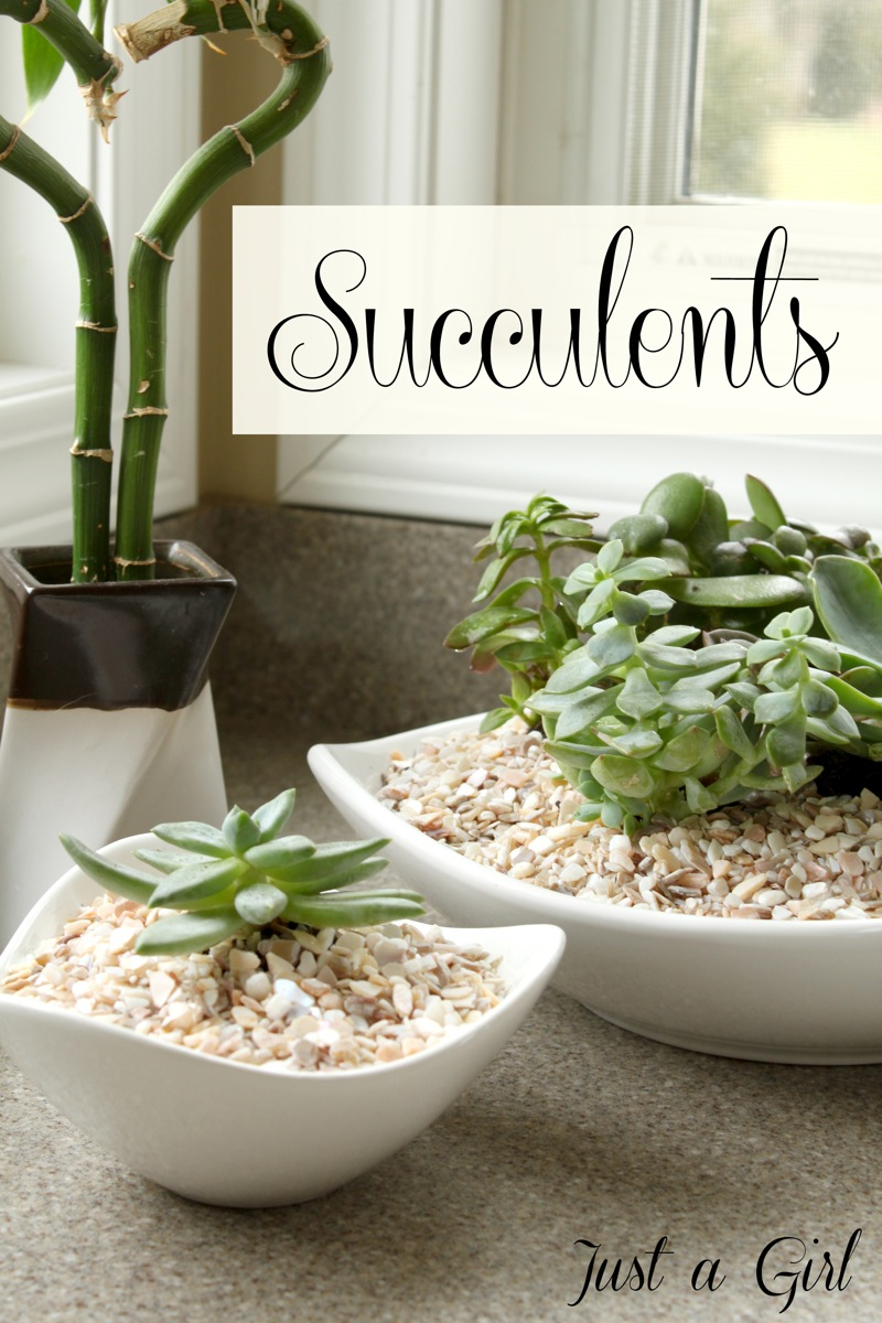 Succulents Just a Girl