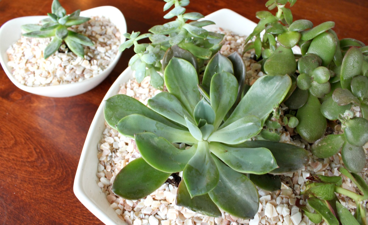 Succulent bowl just a girl blog