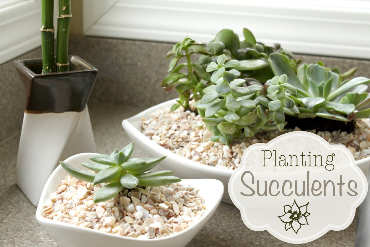 Succulent just a girl blog