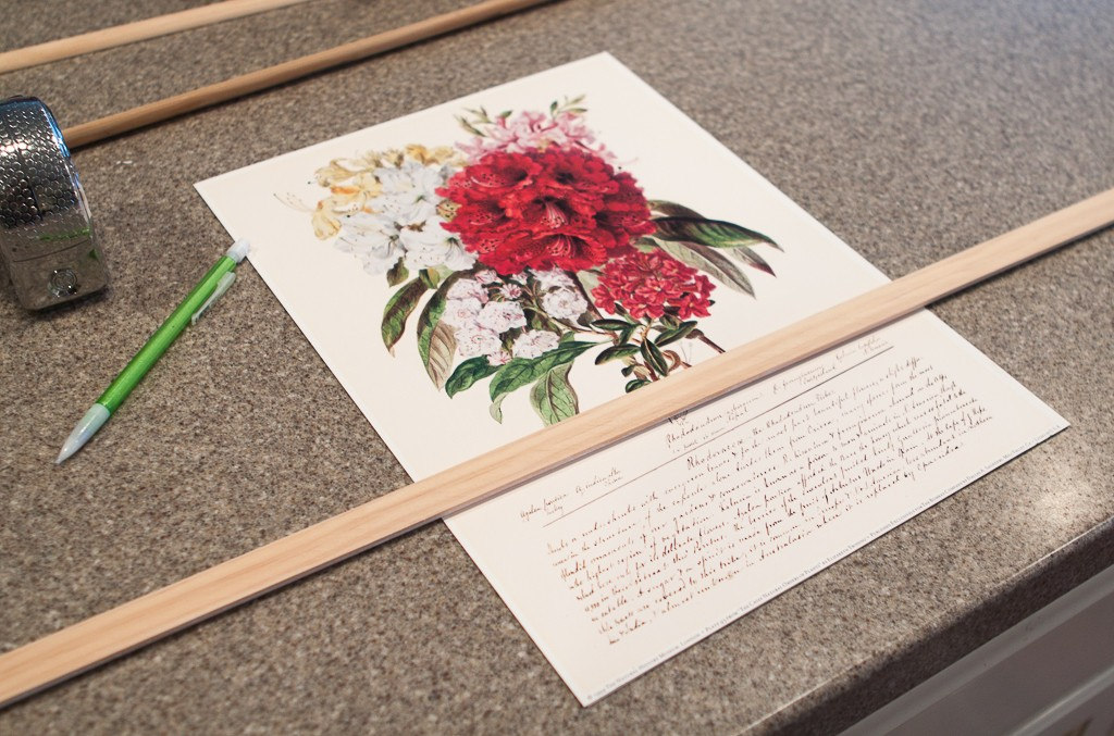 how to frame botanical prints