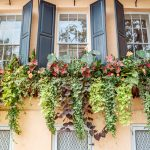 lush window boxes in Charleston