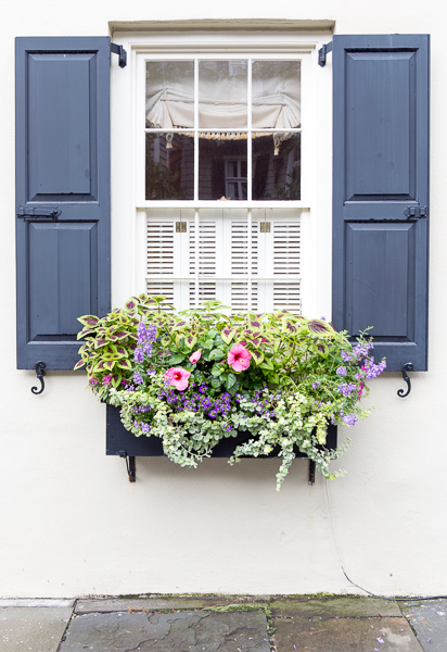 Visit Charleston for the window boxes
