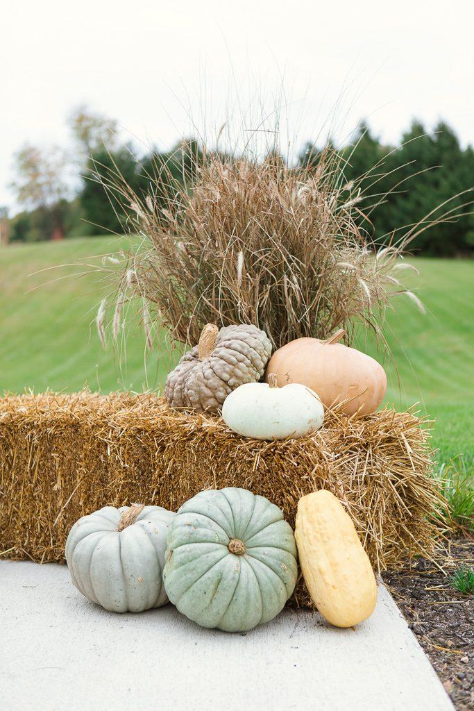 hay and pumpkin decorating