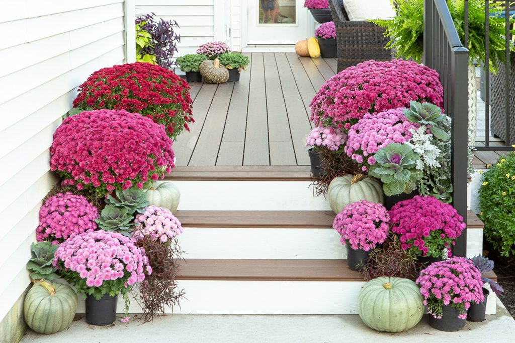 mums on porch